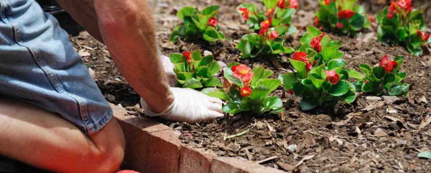 planting the flower