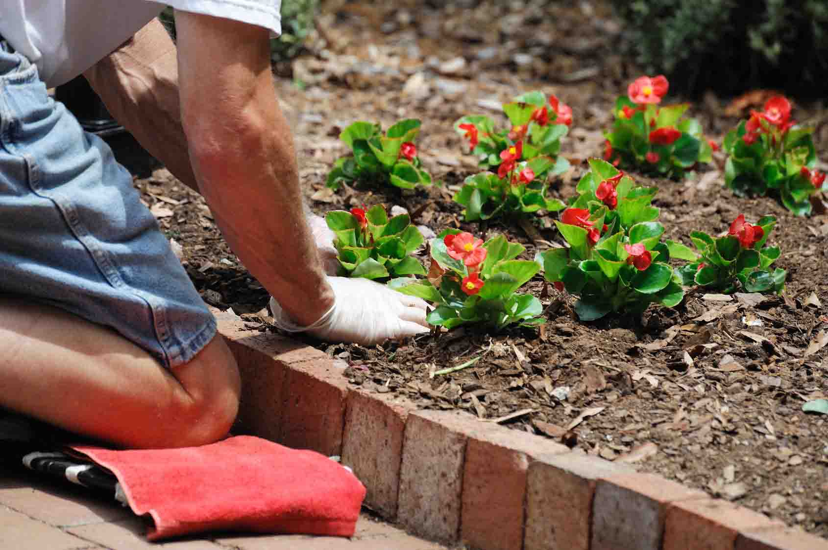 Easy To Follow Garden Tips For Beginners